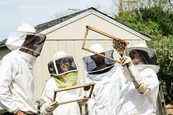 <h3>Bees and beekeeping experience</h3>